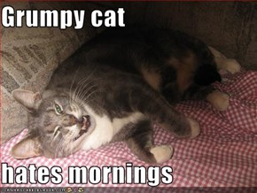 Grumpy cat  hates mornings