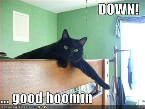 DOWN!  ... good hoomin