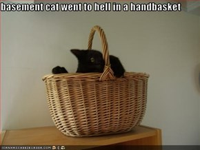 basement cat went to hell in a handbasket