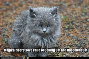 Magical secret love child of Ceiling Cat and Basement Cat