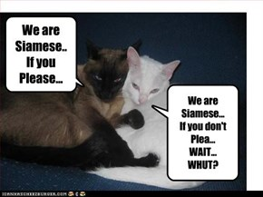 We are Siamese.. If you Please...
