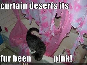 curtain deserfs its  fur been             pink!