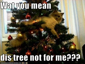 Wat you mean  dis tree not for me???