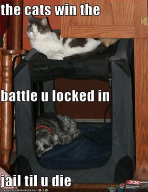 the cats win the battle u locked in jail til u die