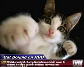 Cat Boxing on HBO - Whiskerweight champ Meowhammed Ali vows to defend his title against Mittens Mayweather
