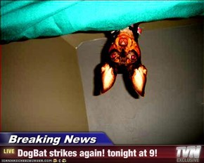 Breaking News - DogBat strikes again! tonight at 9!