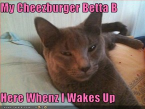My Cheezburger Betta B  Here Whenz I Wakes Up