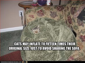 CATS MAY INFLATE TO FIFTEEN TIMES THEIR ORIGINAL SIZE, JUST TO AVOID SHARING THE SOFA.