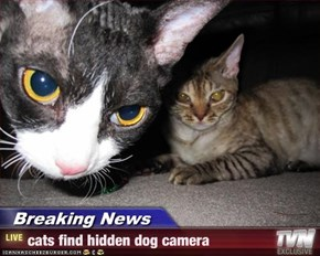 Breaking News - cats find hidden dog camera