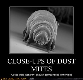 CLOSE-UPS OF DUST MITES