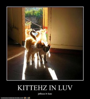 KITTEHZ IN LUV