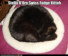 Stella D'Oro Swiss Fudge Kitteh