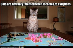 Cats are natrualy talented when it comes to evil plans.
