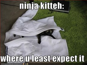 ninja kitteh:  where u least expect it