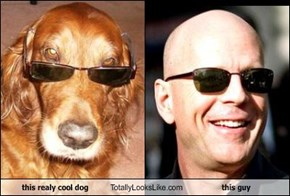this realy cool dog Totally Looks Like this guy