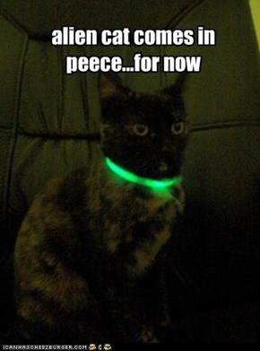 alien cat comes in peece...for now