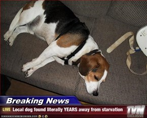 Breaking News - Local dog found literally YEARS away from starvation