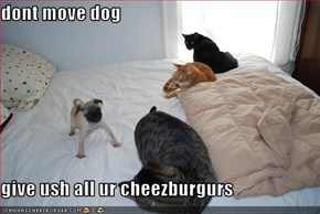 dont move dog  give ush all ur cheezburgurs