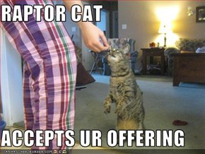 RAPTOR CAT  ACCEPTS UR OFFERING