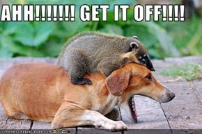 AHH!!!!!!! GET IT OFF!!!!
