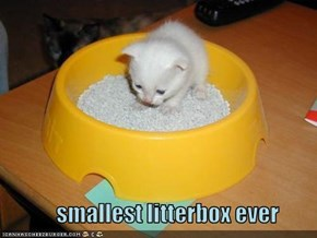 smallest litterbox ever