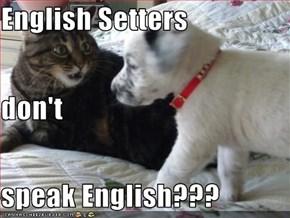 English Setters don't speak English???
