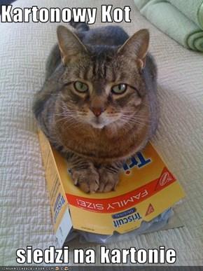Kartonowy Kot  siedzi na kartonie