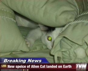 Breaking News - New speice of Alien Cat landed on Earth