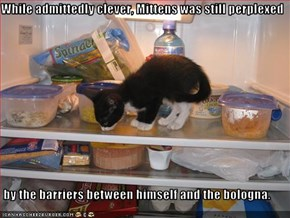 While admittedly clever, Mittens was still perplexed   by the barriers between himself and the bologna.