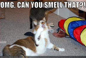 OMG, CAN YOU SMELL THAT?!
