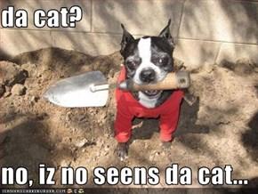 da cat?  no, iz no seens da cat...