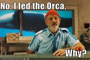 No, I fed the Orca,  Why?