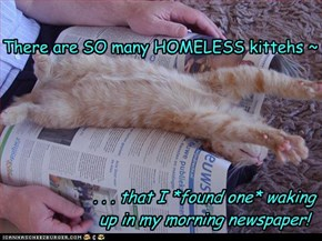 There are SO many HOMELESS kittehs ~