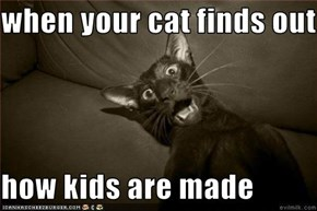 when your cat finds out   how kids are made