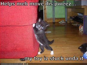 Helps meh move dis pweez...  ...my toy iz stuck unda it