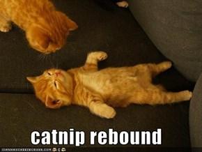 catnip rebound