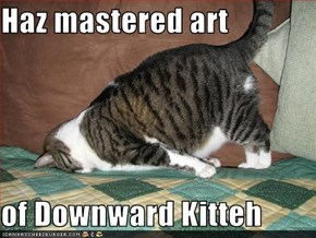 Haz mastered art   of Downward Kitteh