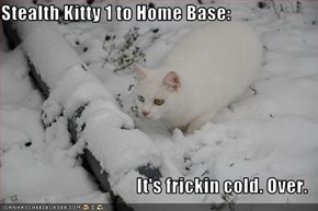 Stealth Kitty 1 to Home Base:  It's frickin cold. Over.
