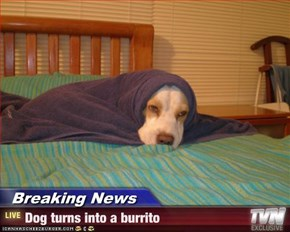 Breaking News - Dog turns into a burrito