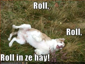 Roll, Roll, Roll in ze hay!