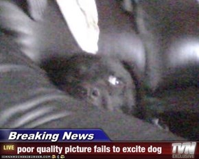 Breaking News - poor quality picture fails to excite dog