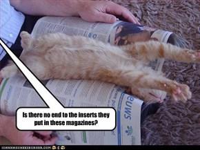 LOLcat print advertising