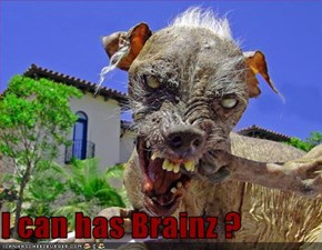 I can has Brainz ?