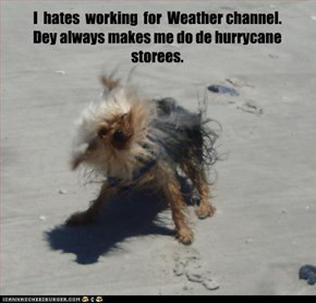 I  hates  working  for  Weather channel.   Dey always makes me do de hurrycane storees.