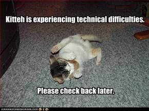 Kitteh is experiencing technical difficulties.