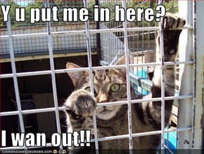 Y u put me in here?  I wan out!!