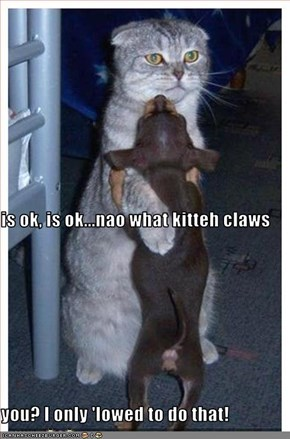 is ok, is ok...nao what kitteh claws you? I only 'lowed to do that!