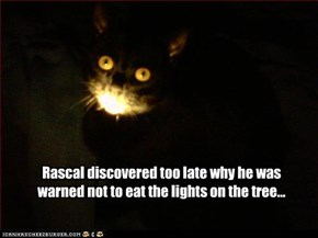 Rascal discovered too late why he was warned not to eat the lights on the tree...