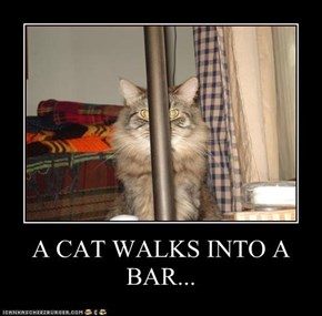 A CAT WALKS INTO A BAR...