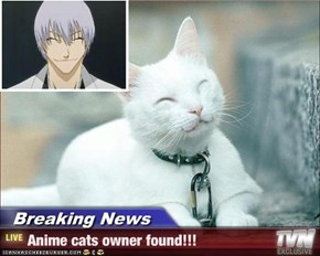 Breaking News - Anime cats owner found!!!